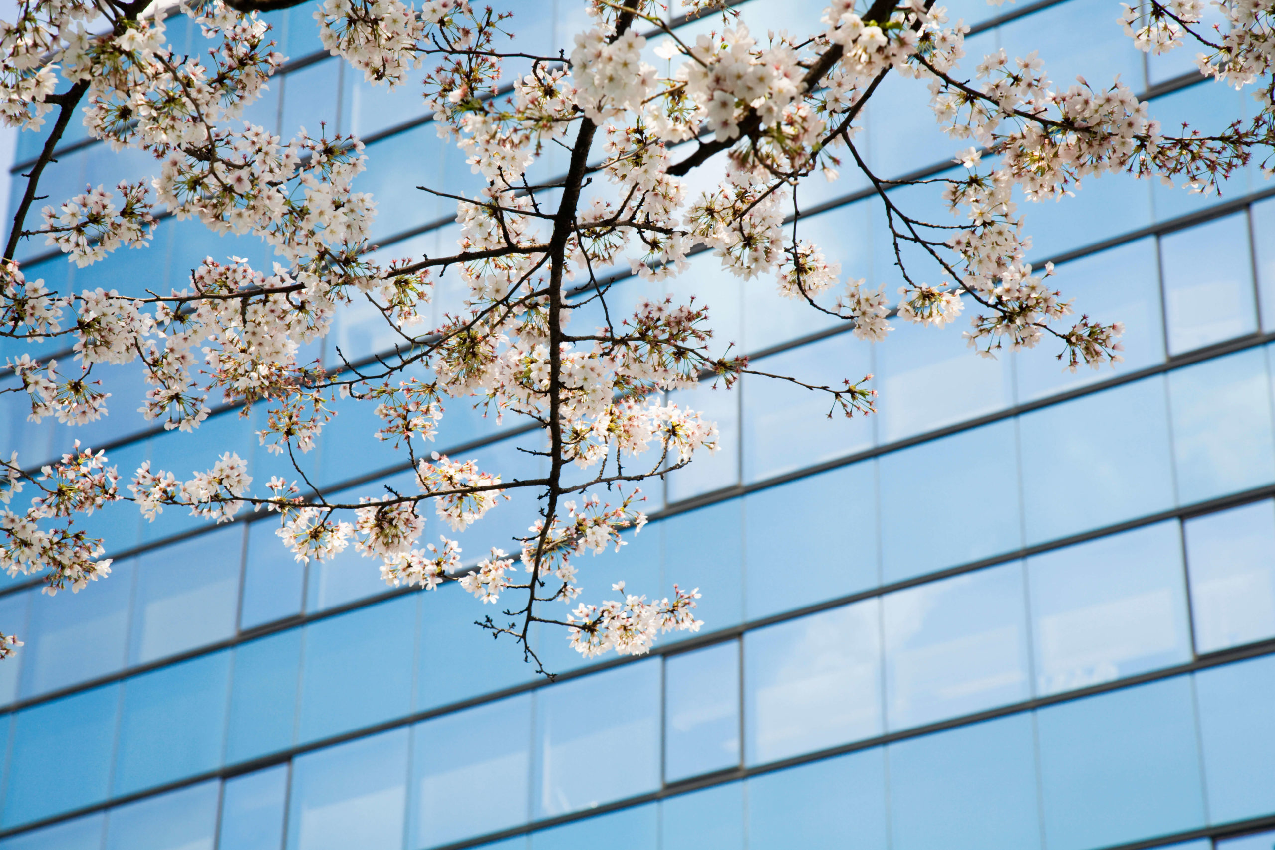 Spring in Japan and Europe